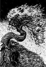 Merlin Books Illustration 3