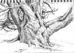 Curragh Chase, Ireland sketch